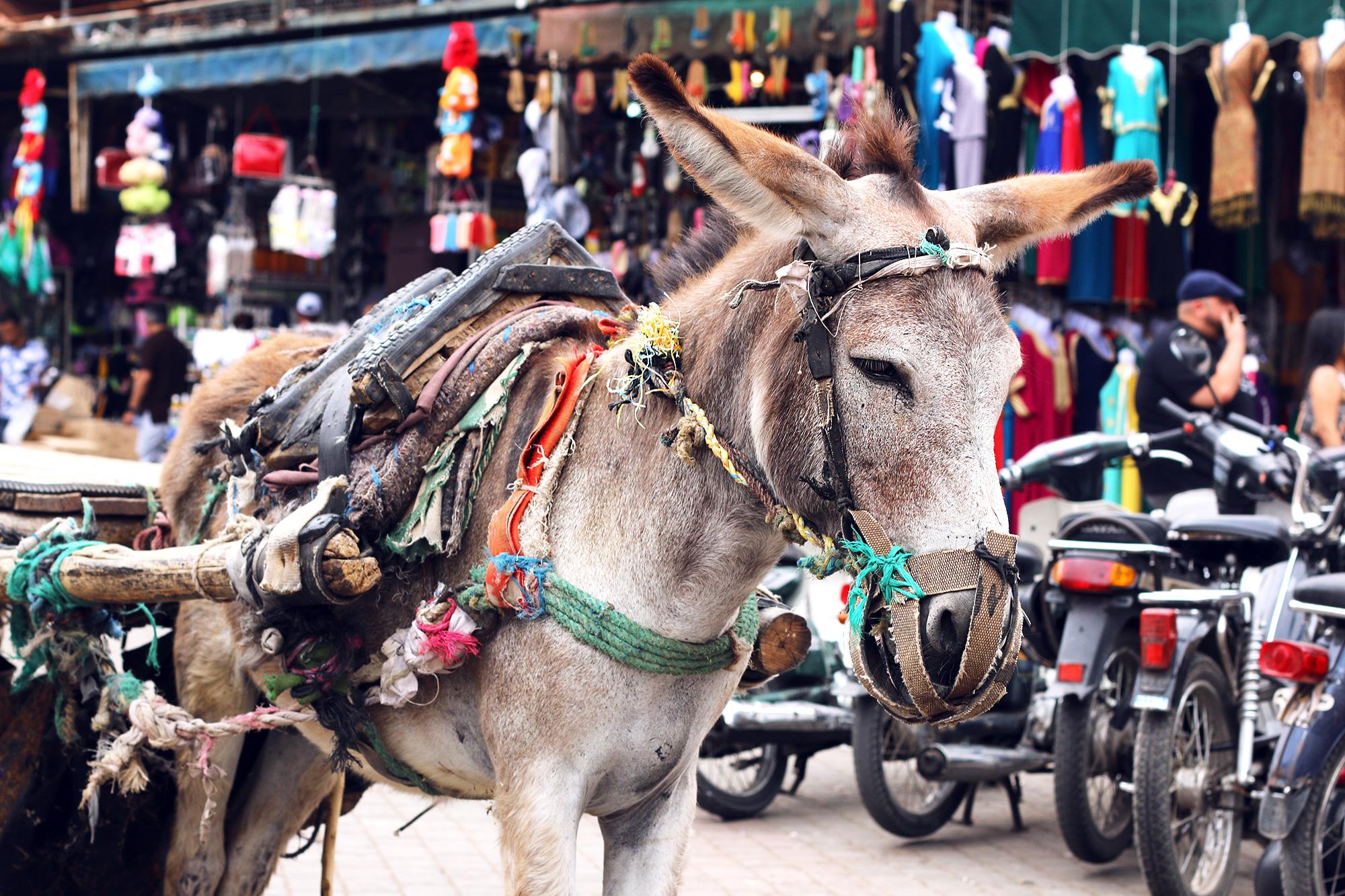 Marrakch-Travel-Tips-5