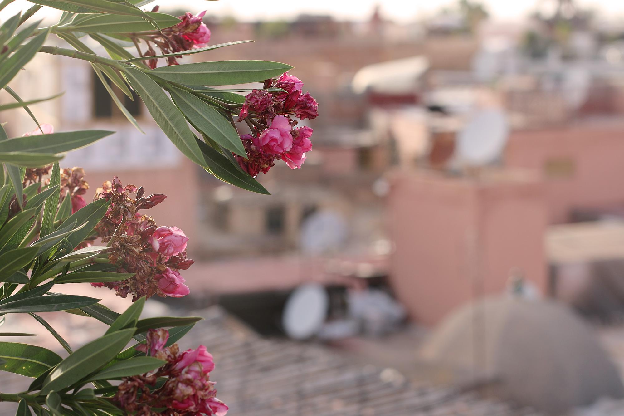Marrakech-Travel-Tips-12