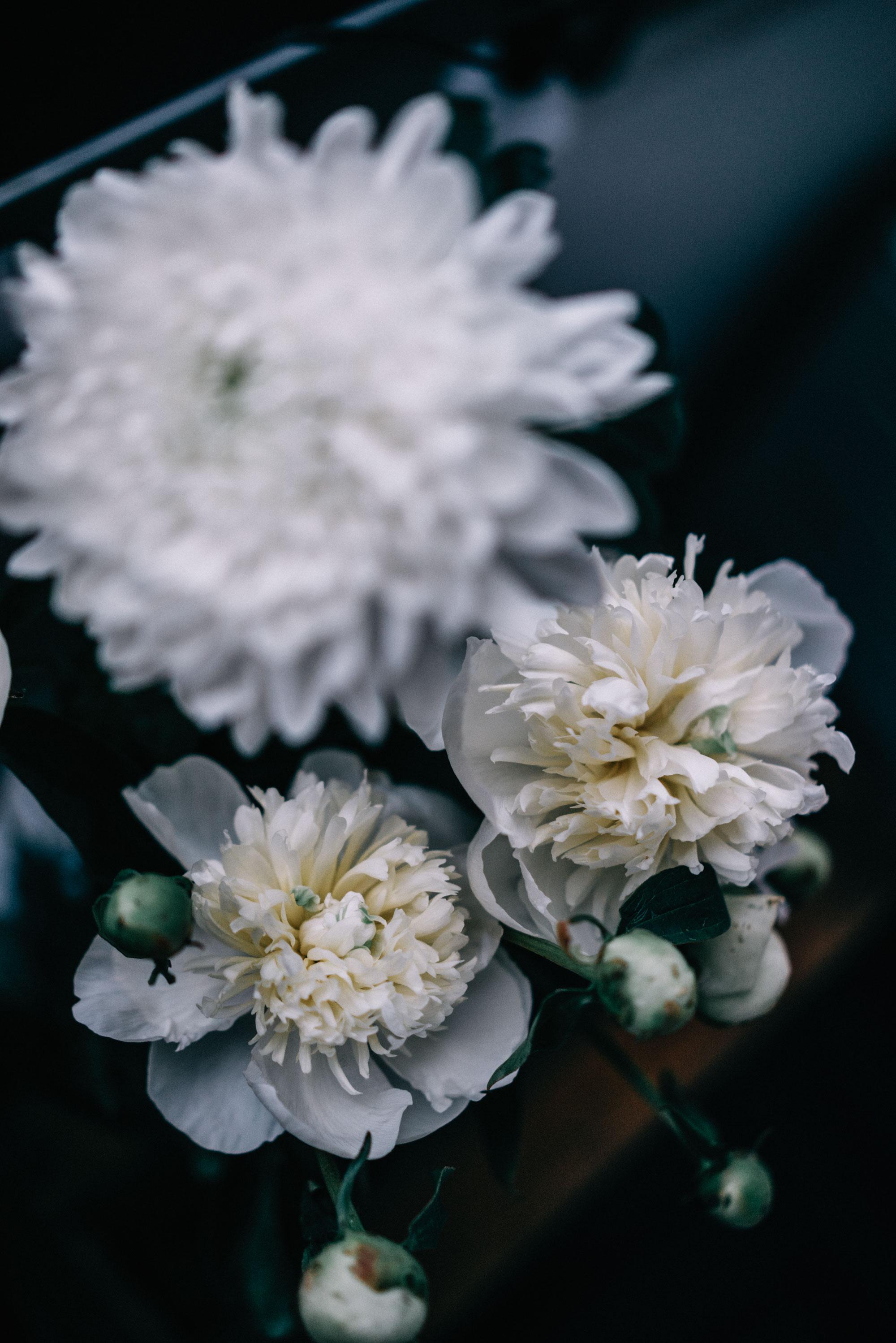 Blumen / Pfingstrosen
